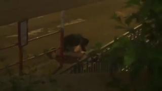 大陸學生香港巴士站野戰